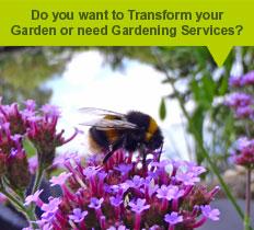 garden maintenance in chelmsford