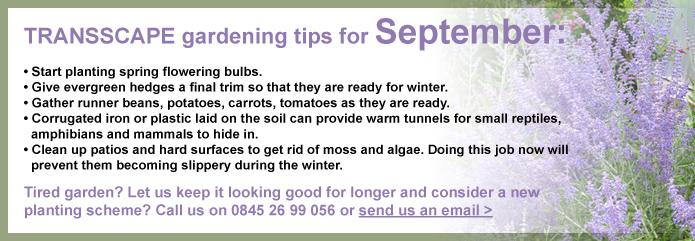 Transscape Gardening Tips for September