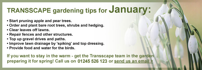 Transscape Gardening Tips for January