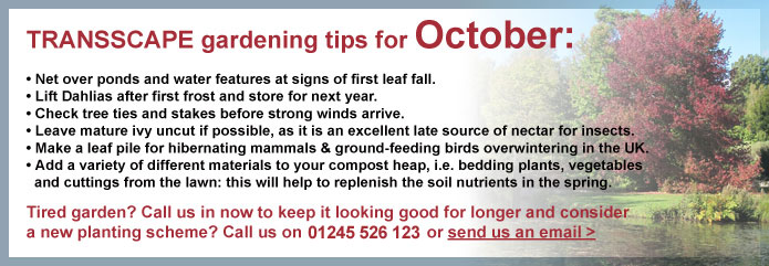 Transscape Gardening Tips
