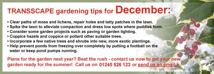 Transscape Gardening Tips for December