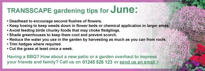 Transscape Gardening Tips for June