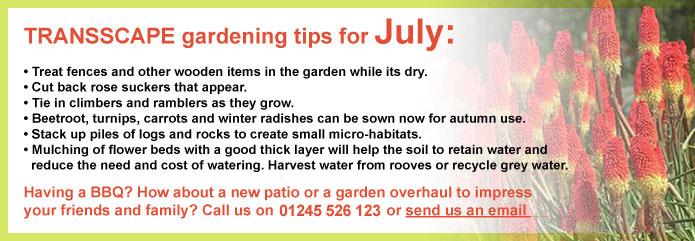 Transscape Gardening Tips for July