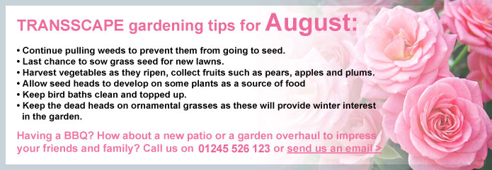 Transscape Gardening Tips for August